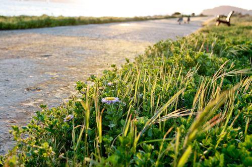 Shorelinepark-11