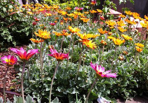 Flowers SF