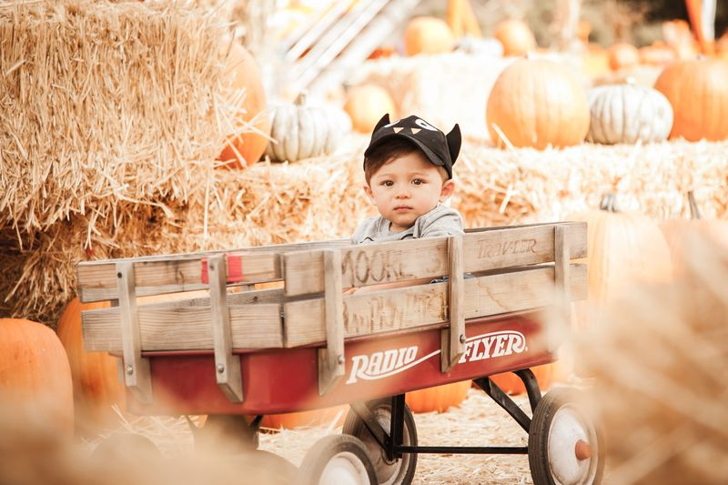 Pumpkin_patch-6